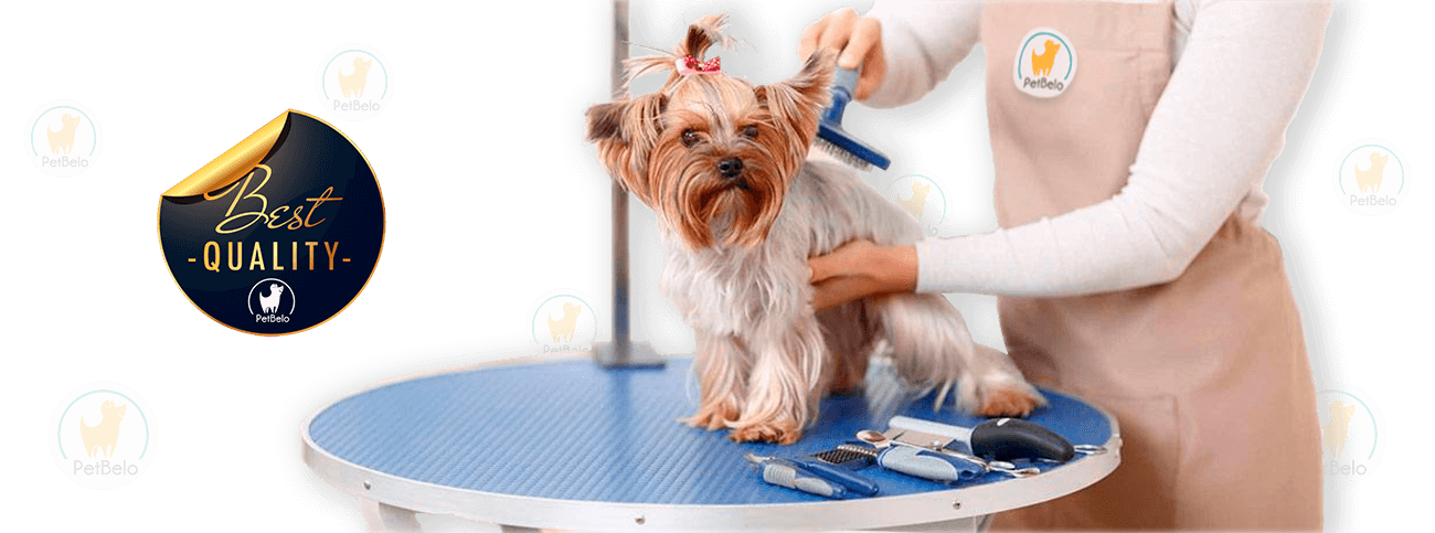 grooming-pet-shop-banhos-campo-de-ourique-lisboa