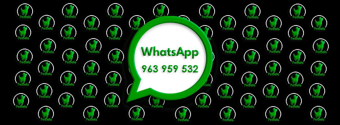 whatsapp-pet-shop-banhos-campo-de-ourique-lisboa